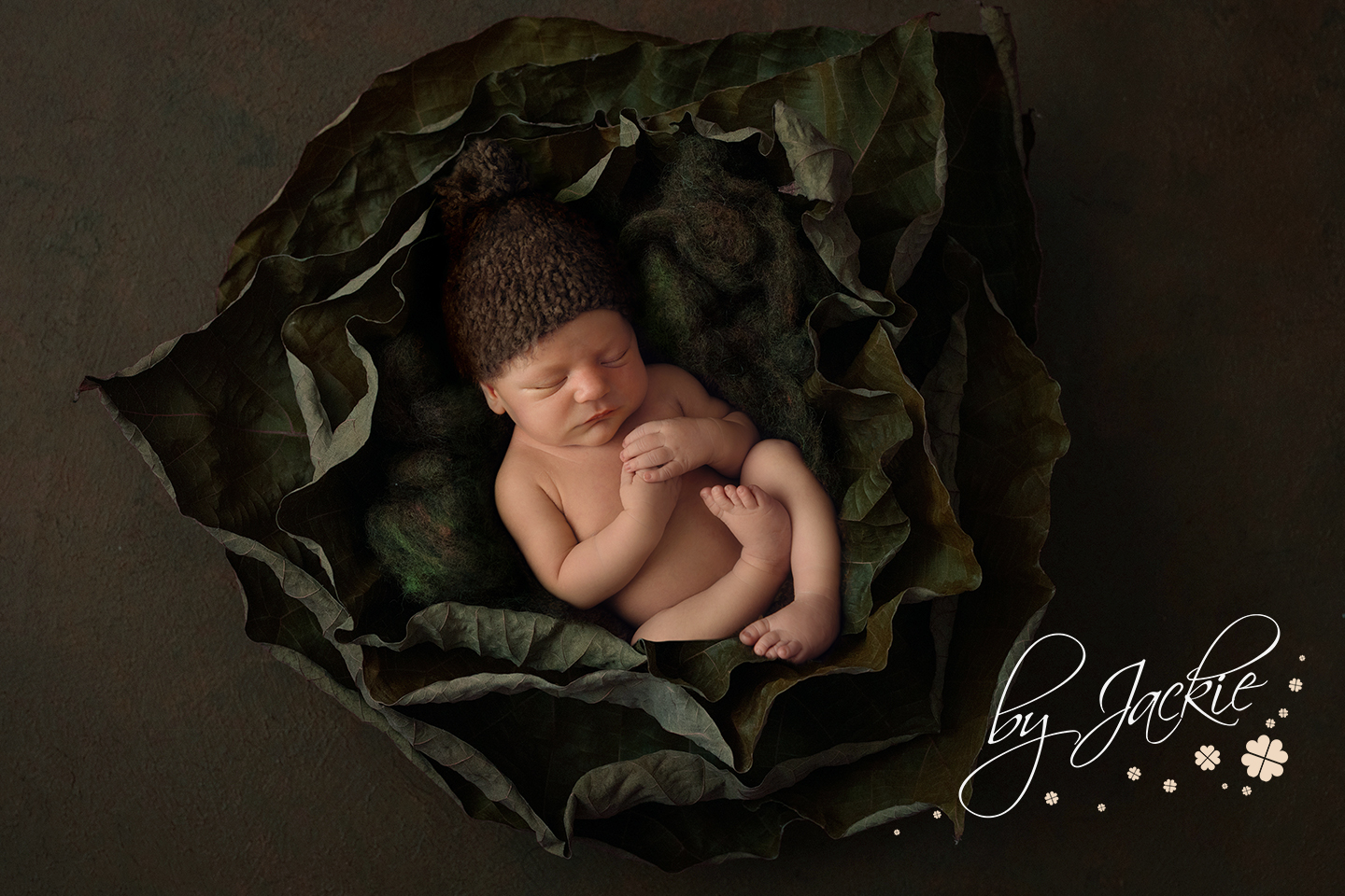 Newborn baby boy asleep in the cabbage leaves by Babies By Jackie in Market Weighton, near Pocklington, North Yorkshire UK