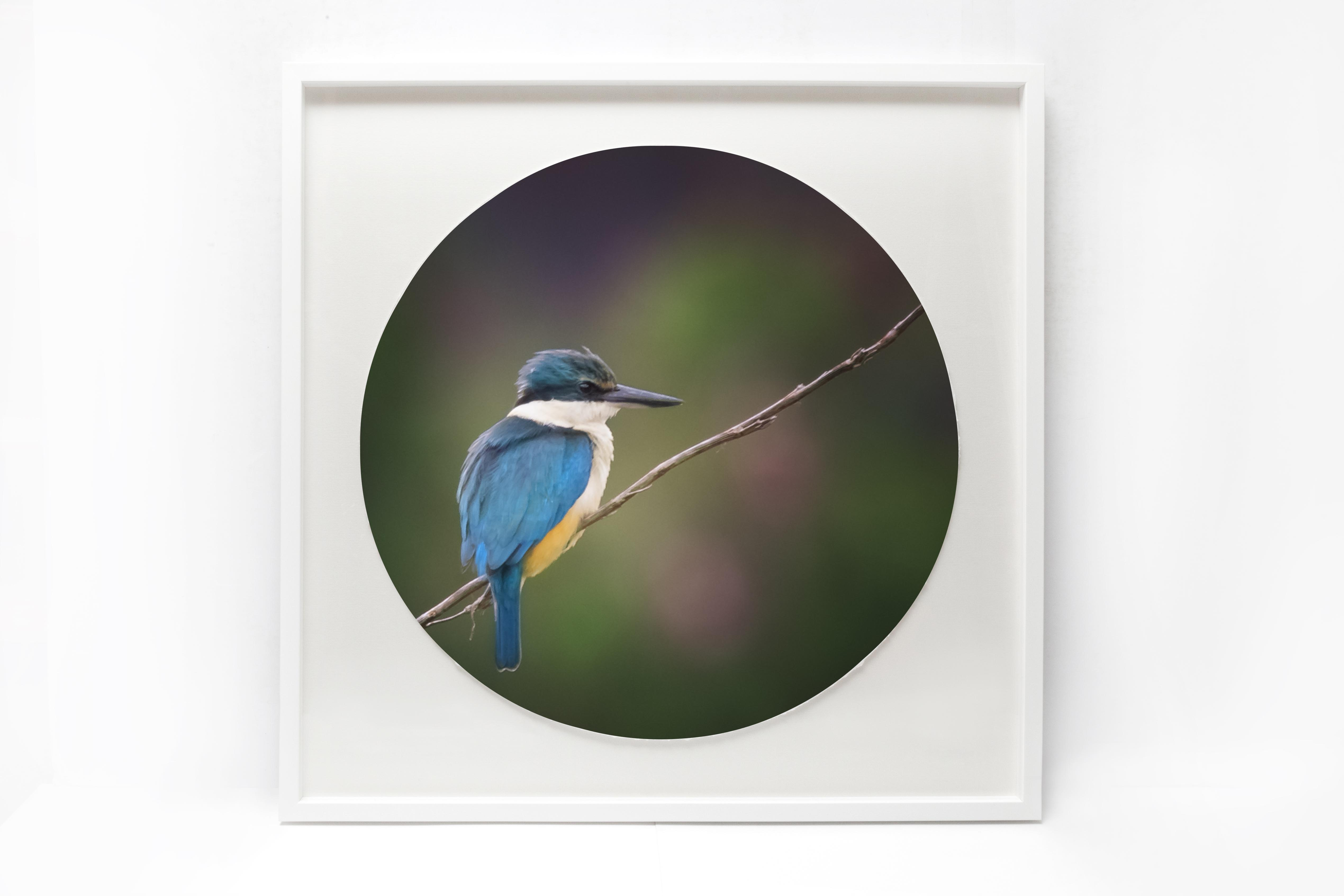 Kingfisher in a square frame with a circular mat.